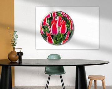 Rot mit weiße Tulpen in Glaskugel auf dem Keukenhof in Holland von Ben Schonewille