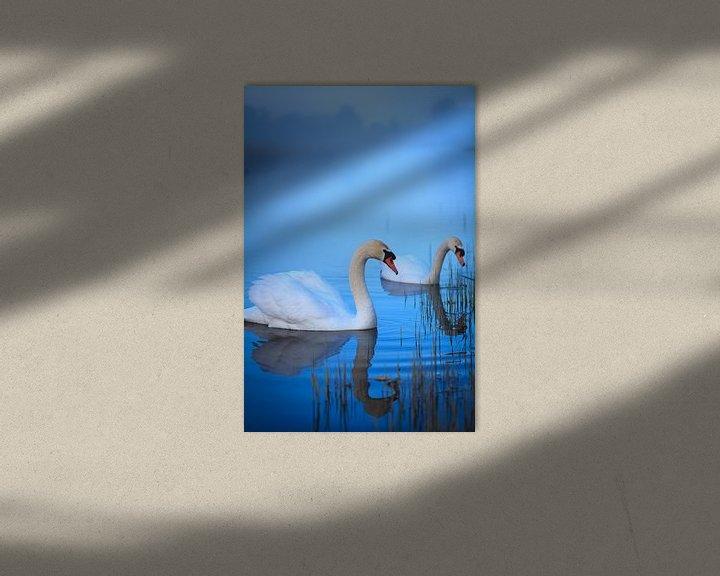 Sfeerimpressie: Witte zwanen in het ochtendlicht van Ron Buist