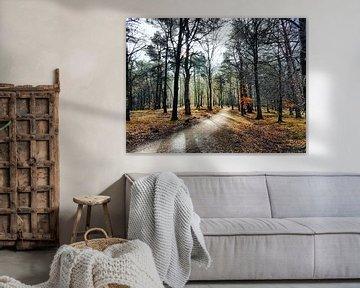 Zon door bomen, kleurrijk Spanderswoud van Danielle Bosschaart