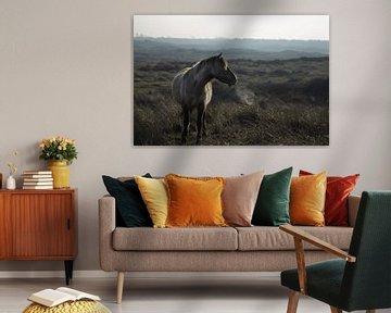 Wild paard @ Huisduinen van Jitske Cuperus-Walstra