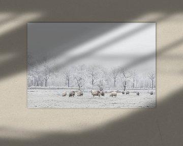 Schapen in de sneeuw van Jitske Cuperus-Walstra