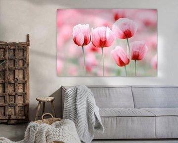 Cinq fleurs de pavot sur Daniela Beyer