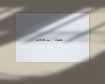 Schapen in een Hollands winterlandschap van eric van der eijk