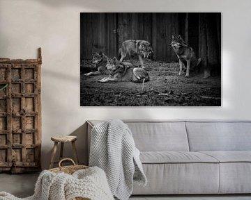 Zwart wit foto van wolven von Abi Waren