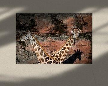 Twee giraffen sur Abi Waren