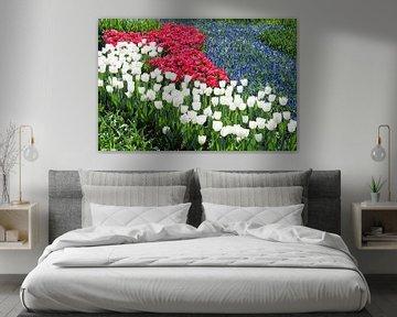 Tulpenfeld mit roten und weißen Tulpen und blauen Traubenhyazinthen von Ben Schonewille