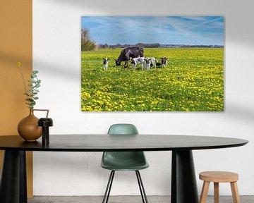 Kuh mit Kälbern mit blühenden gelben Löwenzahn weiden auf der Wiese von Ben Schonewille