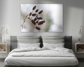 Elzenpropjes in de winter von Marieke de Boer