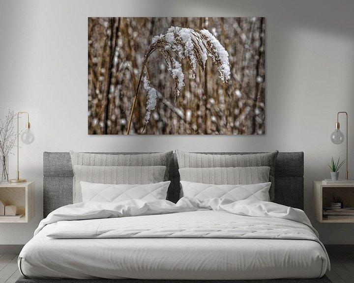 Sfeerimpressie: Besneeuwde rietpluim van Frans Blok