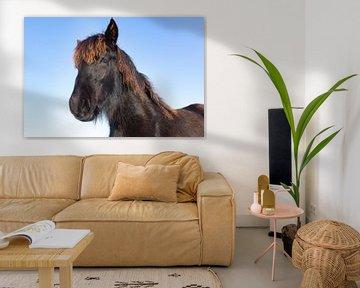 Portrait Kopf schwarz Fries Pferd mit blauem Himmel im Winter von Ben Schonewille