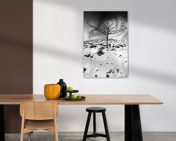 Solitaire boom 2 van Martijn van Huffelen