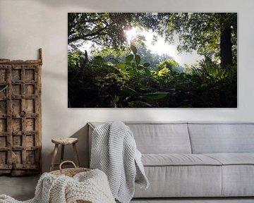 FOREST SUNSHINE PORTAL van Ivanovic Arndts