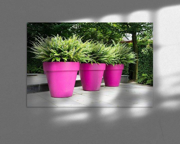 Sfeerimpressie: three purple vases with green plants van Compuinfoto .