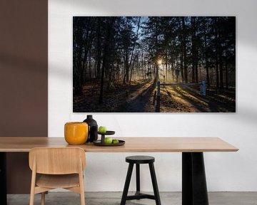 Enter the woods van Bas Van der Swaluw