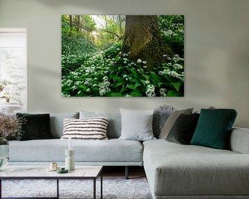 Savels Wald im Frühling sur Marijn Heuts