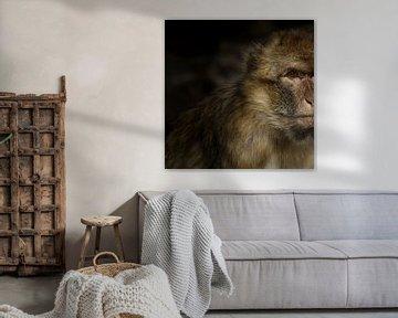 Monkey van Juliën van de Hoef