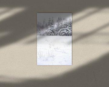 Winter von Gonnie van de Schans