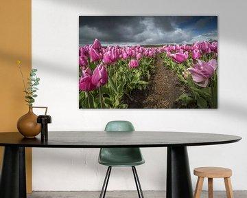 roze tulpenveld van Gonnie van de Schans