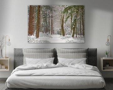 Februari sneeuw in het bos