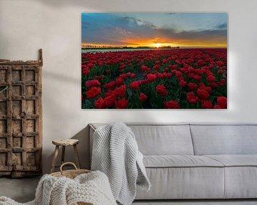 Schöne Sonnenuntergang über einem Feld von Tulpen sur Jos Pannekoek