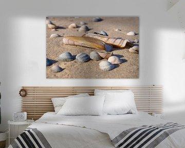 Ensis en kokkel schelpen op het strand van Ad Jekel