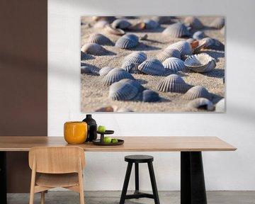 Kokkel schelpen op het strand van Ad Jekel