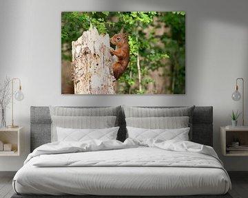 Klimmende eekhoorn sur Elly Besselink