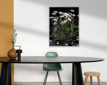 Sparkling - weiße Kapmargeriten im Wind von Christine Nöhmeier