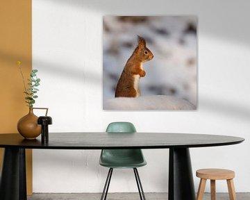 eekhoorn in de sneeuw