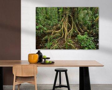 Wortels van een boom in de jungle  van Elles Rijsdijk