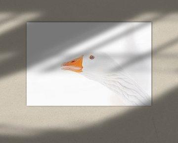 Gänse Kopf in den Schnee. von Marcel Pietersen
