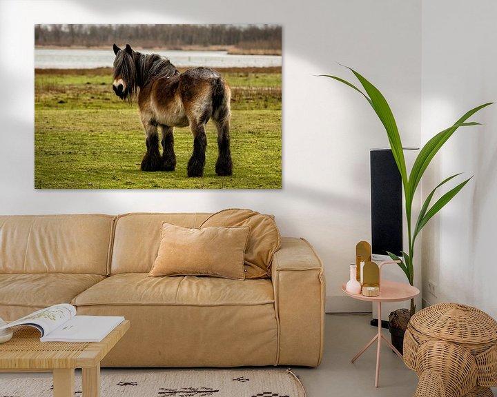 Beispiel: Belgium Draft horse in a Dutch landscape von noeky1980 photography