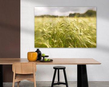 Graanvelden van Marian Steenbergen