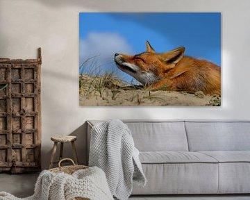 Luie vos, snorharen naar voren. von Yvonne van der Meij