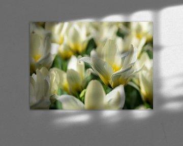 Weiße Tulpen von Gerda Hoogerwerf