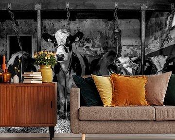 Koeien in oude stal von Inge Jansen