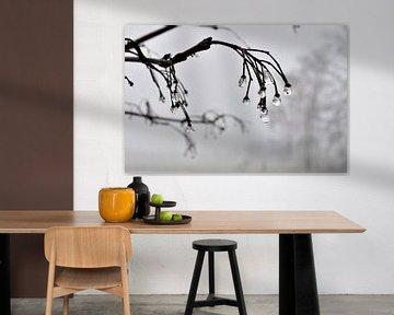 Regendruppels van Ronald en Ancil Fotografie