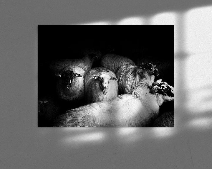 Sfeerimpressie: sheep van Lex Schulte