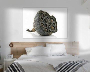Lotus zaaddoos von Tanja van Beuningen