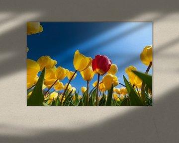 Tulpen von Ben Deiman
