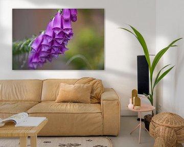 Flowers von Marcel van den Hoven