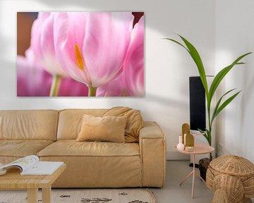 Roze tulpen von Willy Sybesma