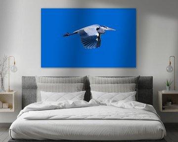 De grote blauwe reiger in vlucht van Foto Amsterdam / Peter Bartelings