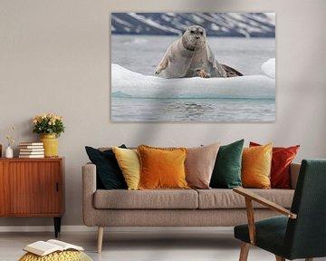 Baardrob rond Spitsbergen van Peter Zwitser