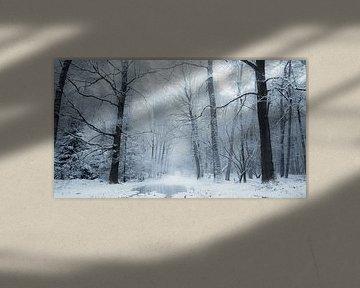 A white world van Rob Visser