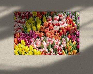 Vielzahl von farbigen Tulpen von eric van der eijk