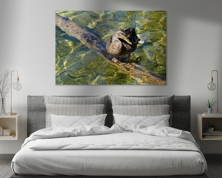 Beispiel: Ente am Teich von Babetts Bildergalerie