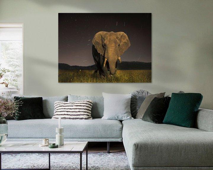 Sfeerimpressie: Tanzaniaanse Olifant van Robbie Veldwijk