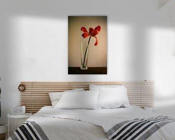 Tulp von Paolo Gant