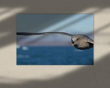 Stormvogelvlucht von Peter Zwitser